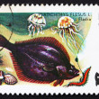 Postage stamp Poland 1979 Flounder, Platichthys Flesus, Fish — Stock Photo #14833277