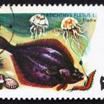 Postage stamp Poland 1979 Flounder, Platichthys Flesus, Fish — Stock Photo