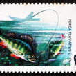 Postage stamp Poland 1979 Perch, Perca Fluviatilis, Fish — Stock Photo