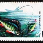 Postage stamp Poland 1979 Perch, Perca Fluviatilis, Fish — Stock Photo