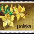 Stock Photo: Postage stamp Poland 1972 Rhododendron, Flavum Don