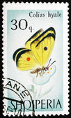 Postage stamp Portugal 1966 Cloudless Sulphur Butterfly, Colias — Stock Photo