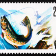Postage stamp Poland 1979 Trout, Salmo Troutta, Fish — Stock Photo