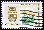 Postage stamp Canada 1966 Mountain Avens, Arms of Northwest Terr — Stock Photo