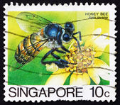 Postage stamp Singapore 1985 Honey Bee Collecting Nectar — Stock Photo