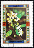 Postage stamp Umm al-Quwain 1972 Flower, Nature — Stockfoto