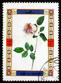 Postage stamp Umm al-Quwain 1972 Rose, Flower — Stock Photo