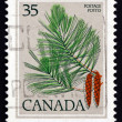 Stock Photo: Postage stamp Canad1979 White Pine, Pinus Strobus, Tree