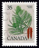 Frimärke kanada 1979 vit tall, pinus strobus, träd — Stockfoto