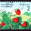 Postage stamp Canada 1992 Wild Strawberry, Fragaria Vesca Plant, — Stock Photo #16800215