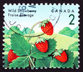 Postage stamp Canada 1992 Wild Strawberry, Fragaria Vesca Plant, — Stock Photo
