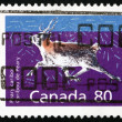 Stock Photo: Postage stamp Canad1990 Peary Caribou, Animal