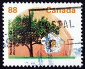 邮票加拿大 1994 westcot 杏,水果树 — 图库照片