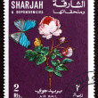 Postage stamp Sharjah 1967 Rose Flower and Butterfly - Stock Photo