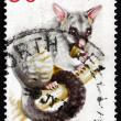 Stock Photo: Postage stamp Australi1974 Common Brushtail Possum