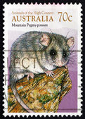 Postage stamp Australia 1990 Common Brushtail Possum — Stock Photo