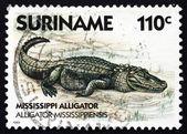 Postage stamp Suriname 1988 Mississippi Alligator, animal — Stock Photo
