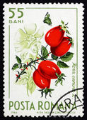 Postage stamp Romania 1964 Wild Rose Hips, Rosa Canina — Stock Photo