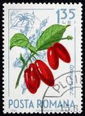 Postage stamp Romania 1964 Cornelian Cherries, Cornus Mas — Stock Photo