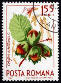 Postage stamp Romania 1964 Common Hazel, Corylus Avelana — Stock Photo