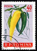 Postzegel roemenië 1963 hete pepers, chilipepertjes — Stockfoto
