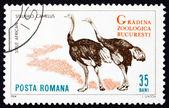 Postage stamp Romania 1964 Ostriches, Struthio Camelus, Bird — Stock Photo