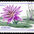 Postage stamp Romania 1965 Zanzibar Water Lily, Nymphaea Zanziba — Stock Photo