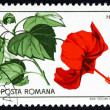 Postage stamp Romania 1965 Chinese Hibiscus, Plant — Stock Photo #18059607