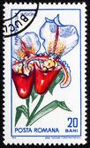 Postage stamp Romania 1965 Orchid, Paphiopedilum Insigne — Stock Photo