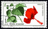 Postage stamp Romania 1965 Chinese Hibiscus, Plant — Stock Photo