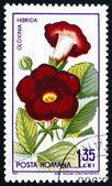 Postage stamp Romania 1965 Gloxinia Hibrida, Plant — Stock Photo