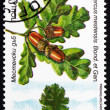 Postage stamp Bulgaria 1992 Oak, Quercus Robur — Stock Photo