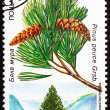 Stock Photo: Postage stamp Bulgari1992 MacedoniPine, Pinus Peuce