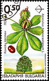 Postage stamp Bulgaria 1992 Horse Chestnut, Aesculus Hippocastan — Stock Photo
