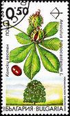 Postage stamp Bulgaria 1992 Horse Chestnut, Aesculus Hippocastan — Stock Photo