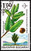 Posta pulu bulgaristan 1992 trakya meşe, quercus thracica — Stok fotoğraf