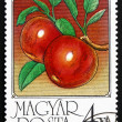 Stock Photo: Postage stamp Hungary 1986 Apples, Malus Domestica