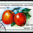 Stock Photo: Postage stamp Malagasy 1992 Apples, Malus Domestica