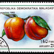 Postage stamp Malagasy 1992 Peaches, Prunus Persica, Fruit - Stock fotografie