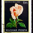 Postage stamp Hungary 1982 Michele Meilland, Rose Flower - Stock fotografie