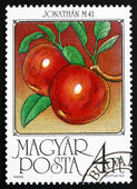 Postage stamp Hungary 1986 Apples, Malus Domestica — Stock Photo