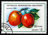 Postage stamp Malagasy 1992 Apples, Malus Domestica — Stock Photo