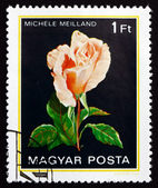 Postage stamp Hungary 1982 Michele Meilland, Rose Flower — Stock Photo