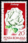 Postage stamp Romania 1970 Iceberg Rose, Rose Cultivar — Stock Photo