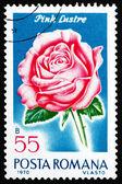Cultivar estampilla rumania 1970 brillo rosado, color de rosa — Foto de Stock