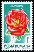 Postage stamp Romania 1970 Piccadilly, Rose Cultivar — Stock Photo