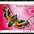 Stock Photo: Postage stamp Romani1969 Willowherb Hawkmoth, Moth