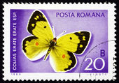 Postage stamp Romania 1969 Eastern Pale Clouded Yellow, Butterfl — Stock Photo