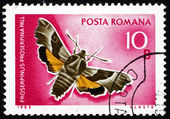 Postage stamp Romania 1969 Willowherb Hawkmoth, Moth — Stock Photo