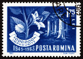 Postage stamp Romania 1963 Beech Forest and Branch — Stock Photo